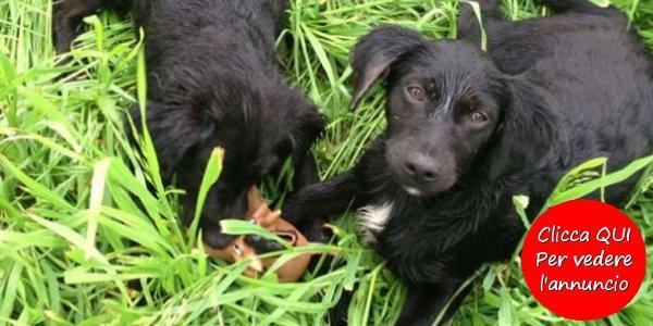 cuccioli-cane-adozione