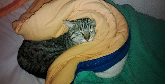foto gatto nascosto letto