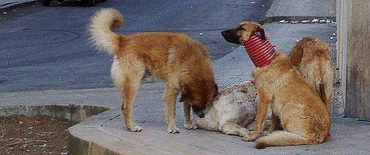 Salvato Il Cane Randagio Di Bagheria Intrappolato In Un Tubo Video
