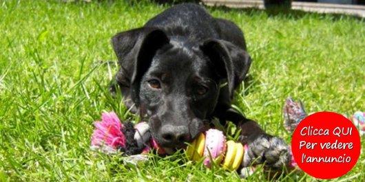 regalo cucciolo di cane