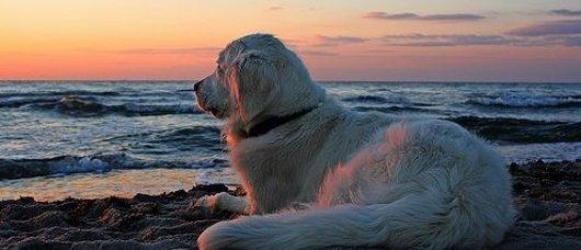 spiagge per cani in abruzzo