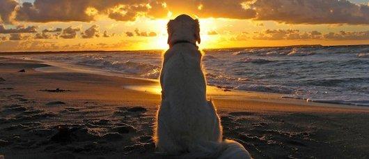 spiaggia-cane-calabria