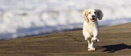 spiagge per cani nel Lazio