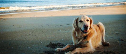 spiagge per cani in Frieuli Venezia Giulia