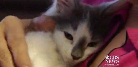 video-gatto-forno-microonde-maltrattamento