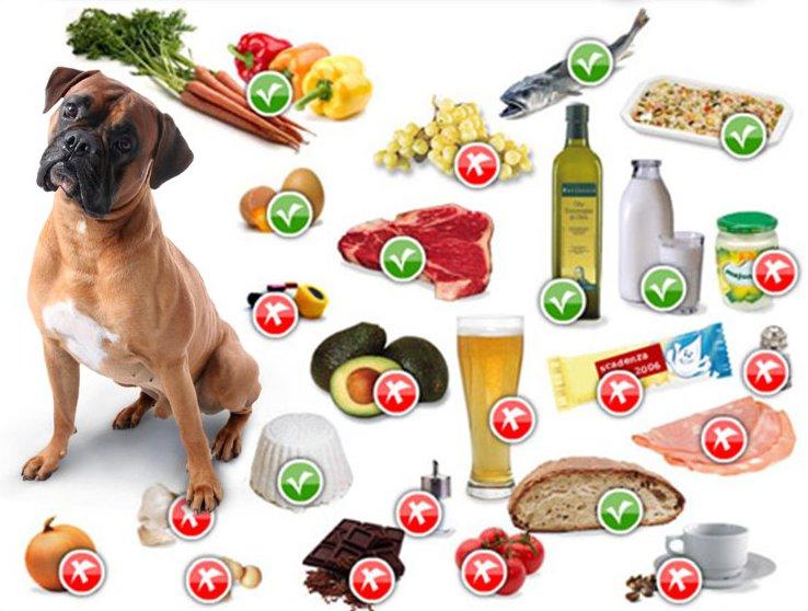 Alimentazione Cane Lista Di Cibi Pericolosi E Alimenti Da Evitare
