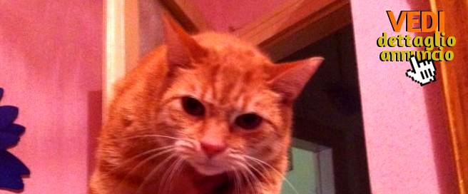 gatto-rosso-adozione