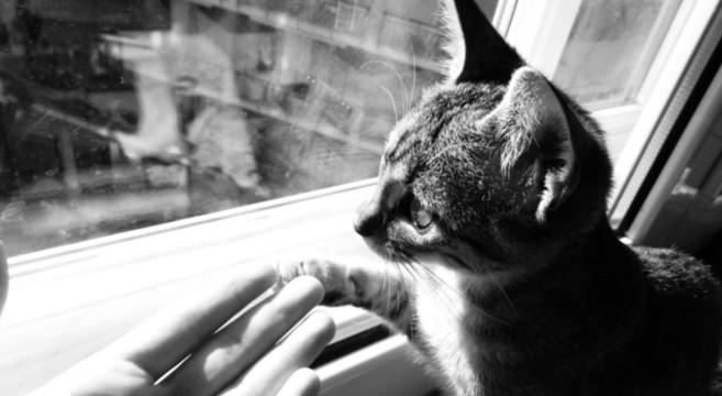 17 febbraio 2017: oggi è la Festa Nazionale del Gatto