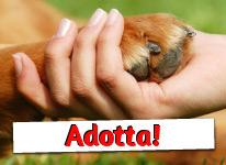 adozioni-animali
