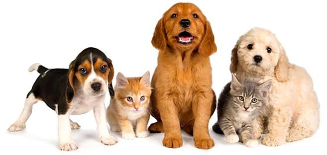 foto-animali-domestici