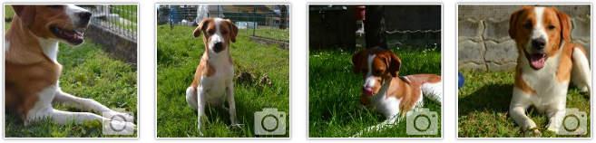 foto-cucciolo-adottato-canile