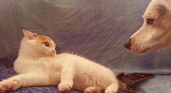 Amicizie tra animali: la storia del cane Willy e del gatto Mimì [foto]