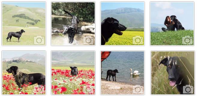foto-amicizia-cane