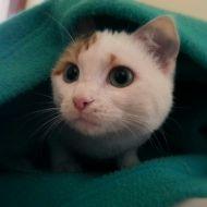 gatto-mimi