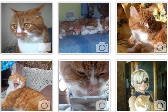 boris-gatto-rosso-3.jpg