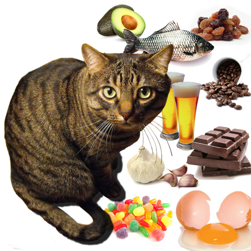 cibi-pericolori-gatto