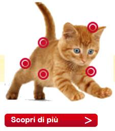 salute-gatto