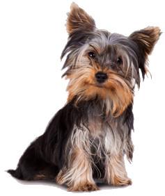 cane-piccola-taglia