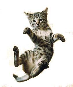 gatto-caduta