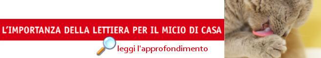 banner-lettiera-gattino