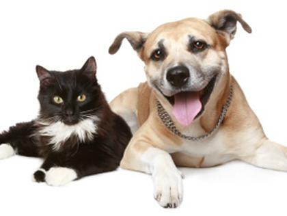 cane-gatto-alimentazione