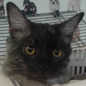 gattino-cicciotto