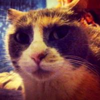 gatto-lea-petpassion