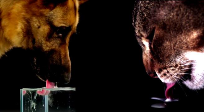 Differenze cane gatto: perchè bevono l'acqua in maniera diversa?