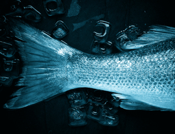 Fish 1149465 1920