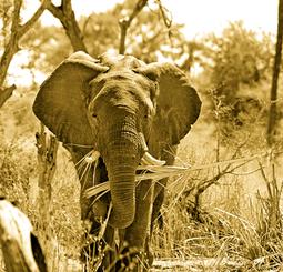 Africa animal elephant 46507