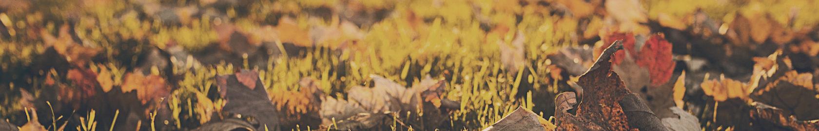 bladeren herfst copy