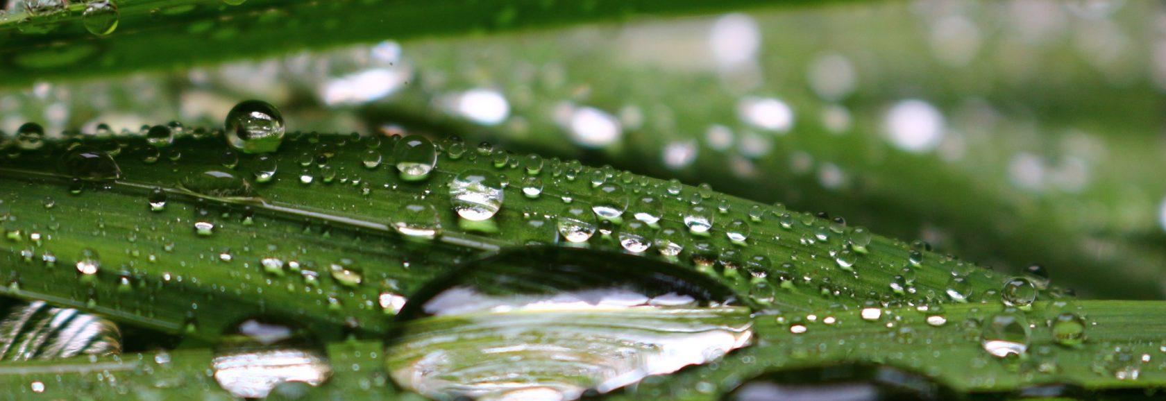 raindrops-1532618_1920