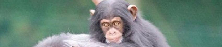 Monkey World Ape Rescue Center