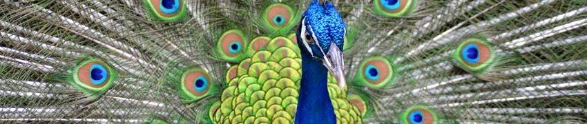 Prinknash Bird Park title=