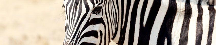 Visit The Award Winning Wildlife Park title=