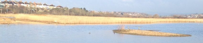 Weymouth Wetlands