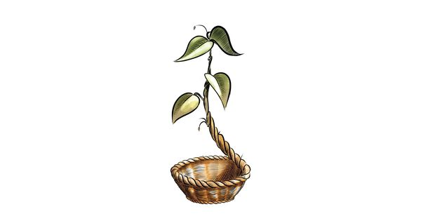 Cooperativa sociale green bin onlus