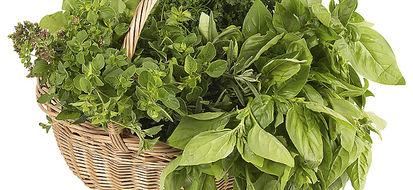 Anche Sassari accetta la sfida vegetariana