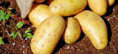 Sono i bolognesi gli abitanti del nord che spendono di più per gli acquisti bio