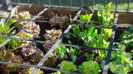 Coltivare un orto con la tecnica dei quadretti
