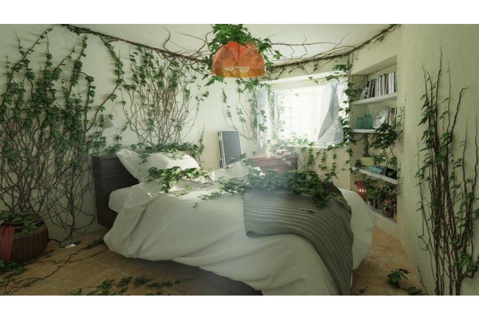 Pianta Camera Da Letto Ossigeno : Piante per la camera da letto