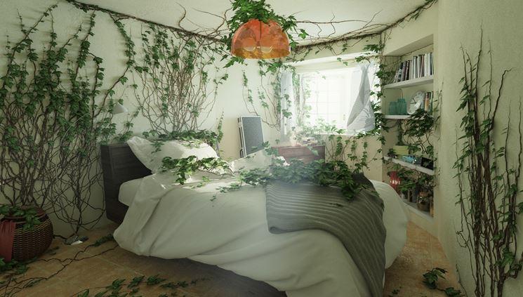 Le 5 piante da camera che combattono insonnia e stress ecosost vivere sostenibile - Piante ideali per camera da letto ...