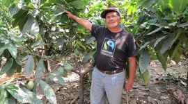 Piantagioni di caffé in Perù