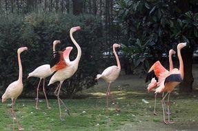 Villa Invernizzi e i suoi fenicotteri rosa