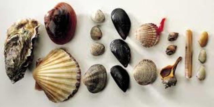 Mari acidi: a rischio la sopravvivenza dei molluschi