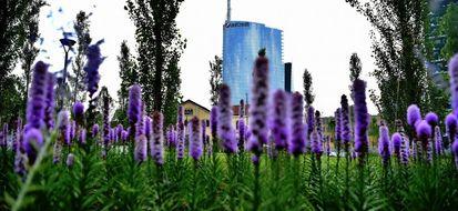 Milano: l'incredibile spettacolo della Biblioteca degli Alberi