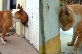 Head pressing, un sintomo da riconoscere in cani e gatti