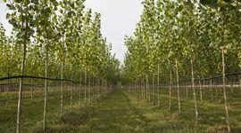 17mila alberi per trasformare la Terra dei fuochi
