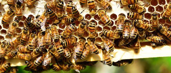 Neonicotinoidi nel miele, un problema mondiale