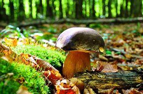 Nei boschi alla ricerca di funghi: le cose da sapere